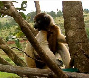 Madagascar ile aux esprits