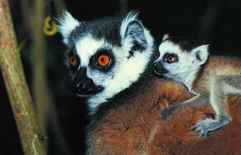 Aires Protégées et le tourisme à Madagascar face à la pandémie 23 Mai 2020