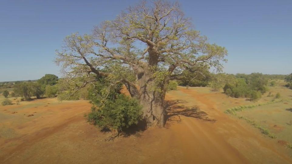 baobas source de vie
