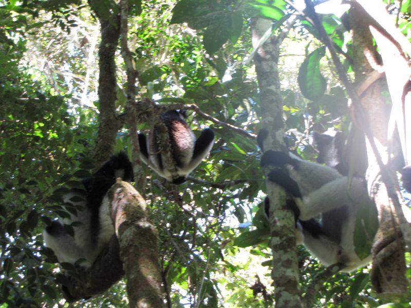 Andasibe marque l'ouverture des parcs nationaux sur toute l'île