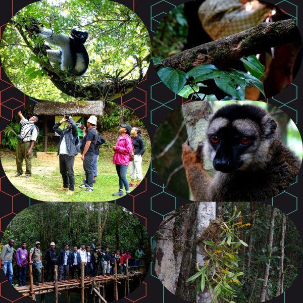 Andasibe Mantadia Formation à la biodiversité Novembre 2020