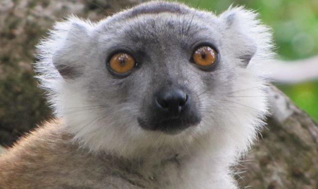 Offres promotionnelles irrésistibles sur le canal des Pangalanes avec Holidays Madagascar