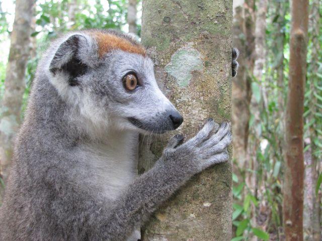 Séjour 2021 dans un nid de reve sur le Canal des Pangalanes