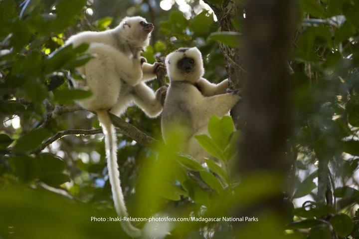 Madagascar National Parks-logo-lemurien-1