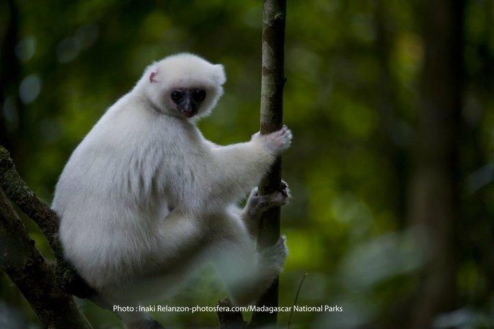 Madagascar National Parks-logo-lemurien-2